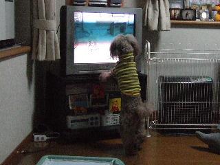 TVに夢中
