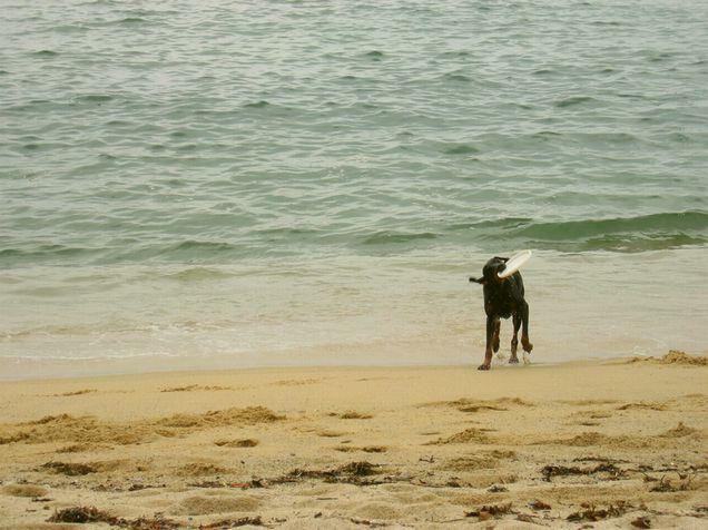 ボルドーと初海 2005