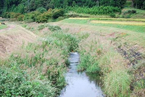菅沼川の風景