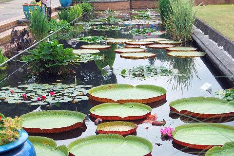 植物園の入り口の蓮池