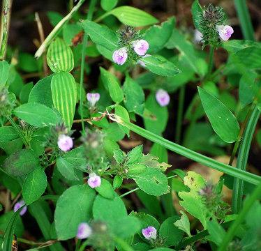 小さな雑草の花