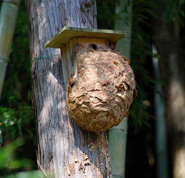 黄色スズメバチの巣