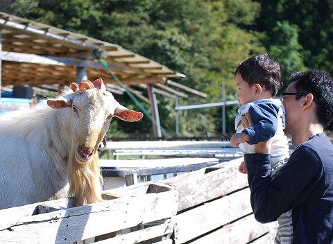大きなヤギと赤ん坊