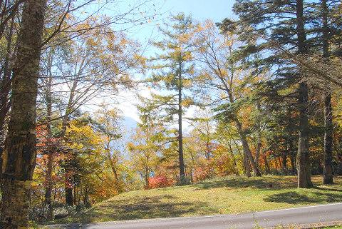 紅葉の森林