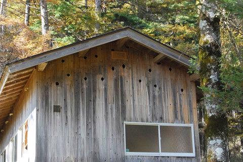 キツツキにやられた小屋