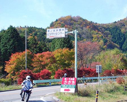 面ノ木の紅葉