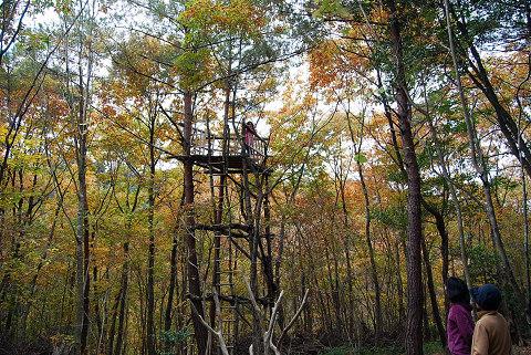 雑木林の秋の風景