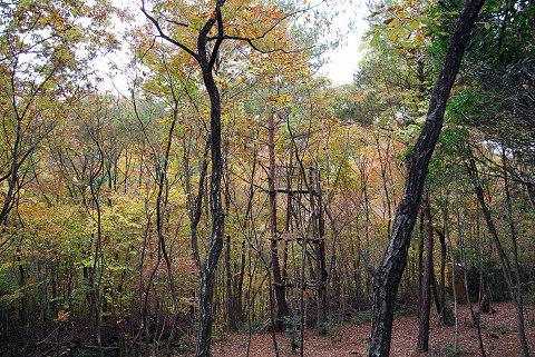 雑木林の風景