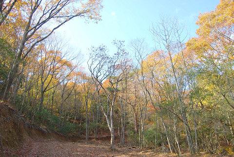 紅葉の雑木林