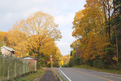 黒瀬街道の紅葉
