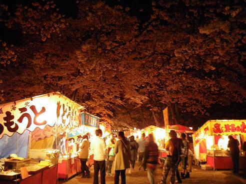 夜桜 026