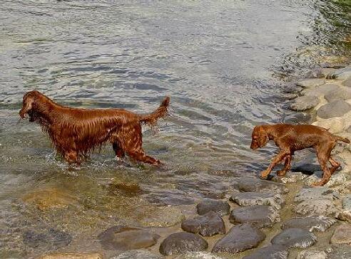 初の川遊び
