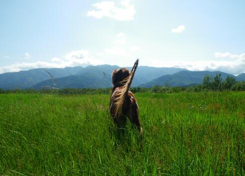 初夏の草原 011