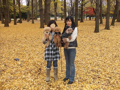 代々木公園の銀杏の林