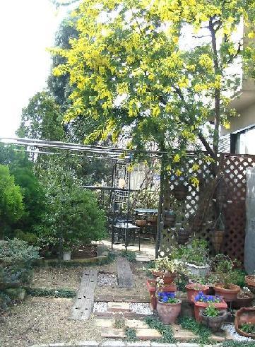 ミモザの庭