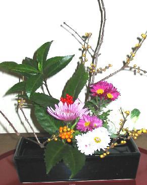 迎春 生花