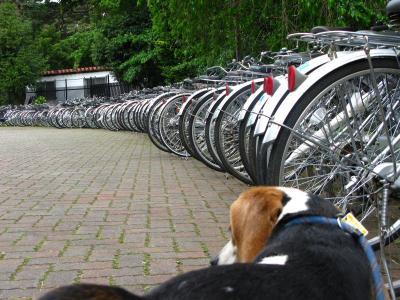 ベリーと自転車