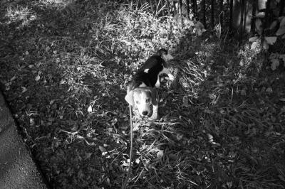 「愛犬ベリー」