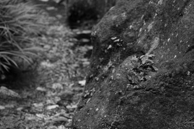 岩の窪みに宿る命