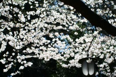 「桜 image」