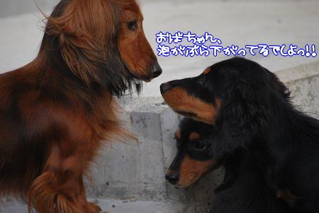 ベルタ&こりっちゃんベビ