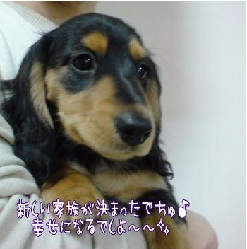 モコちゃんBaby *B/T*