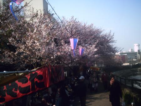 桜(散る寸前)