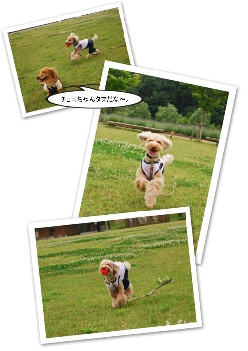 1DSC_0589.jpg