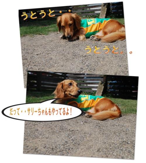 1DSC_2689.jpg