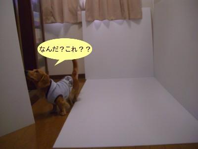 3CIMG0509.jpg