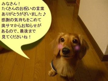 CIMG0153070324.jpg