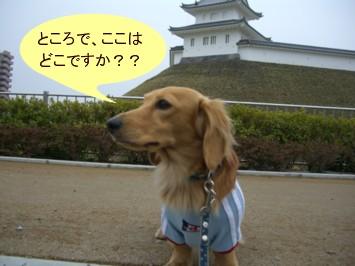 CIMG0178070325.jpg