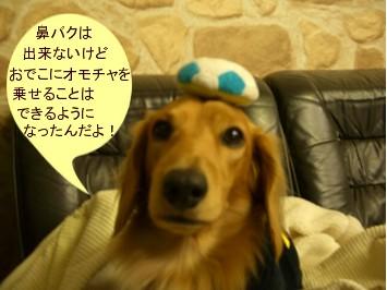 CIMG6274.jpg