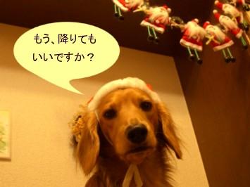 CIMG6703.jpg