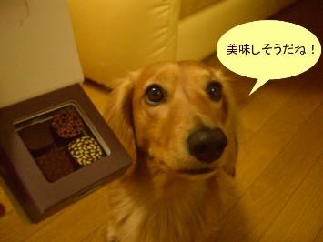CIMG8387.jpg