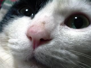 鼻によごれw