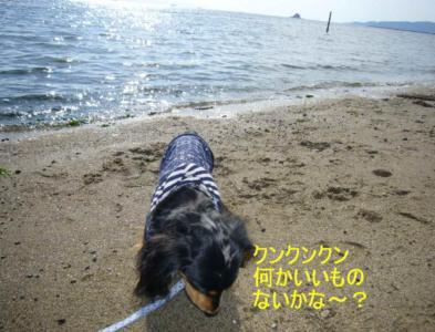 海ライル2