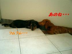 20060715213850.jpg