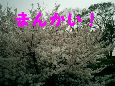 20070403235454.jpg