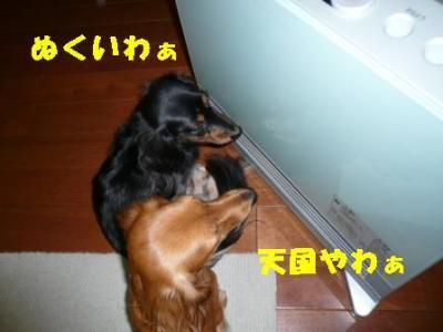 20071113231101.jpg