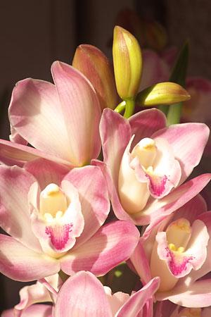 新春らしい花?