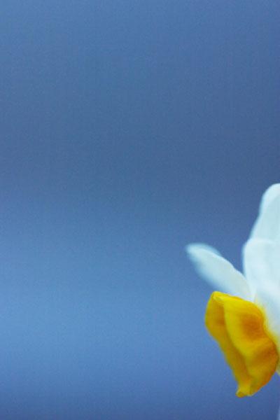 冬をつげる花