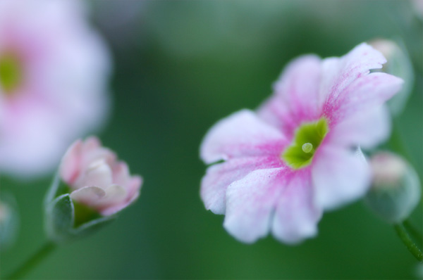 蕾が花に「ちゃんと咲けるかなぁ」と相談しています