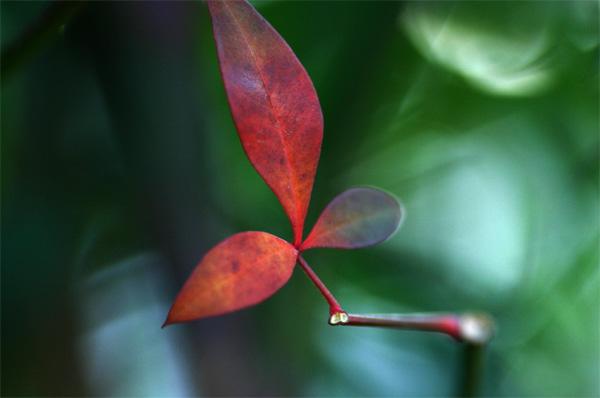 この色の葉っぱいいです~