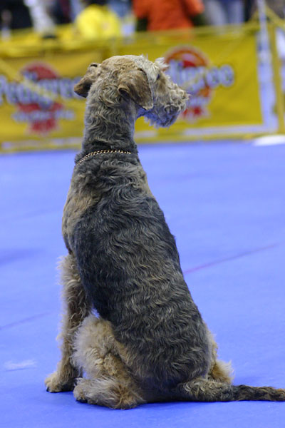 Win3.1の壁紙犬