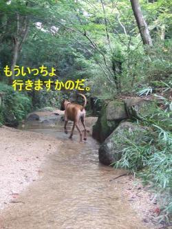 森林公園04