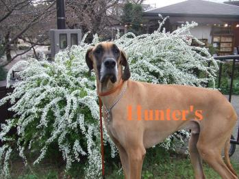 Hunter's