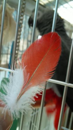 きれいな羽根