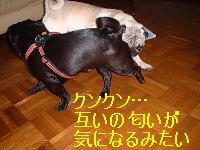 20050710215219.jpg