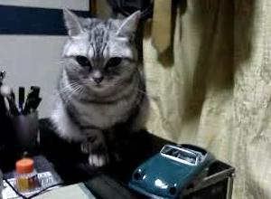 極悪猫動画